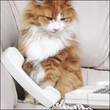 浮気がバレたのは......電話会社のせい!?