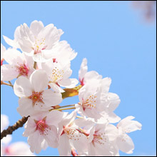春は風俗デビューの季節! 風俗ライターが教える優良店選びのポイント