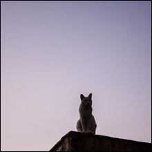 【事件簿】屋根の上で全裸で騒ぐ37歳の女